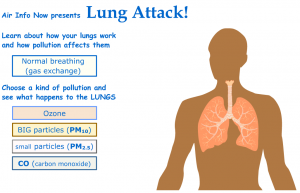 Click on the image to follow an animation on how PM and other airborne toxins affect the body.